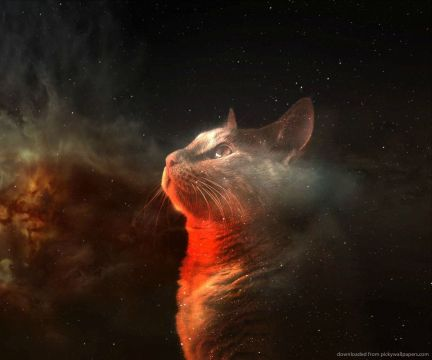 orange space cat